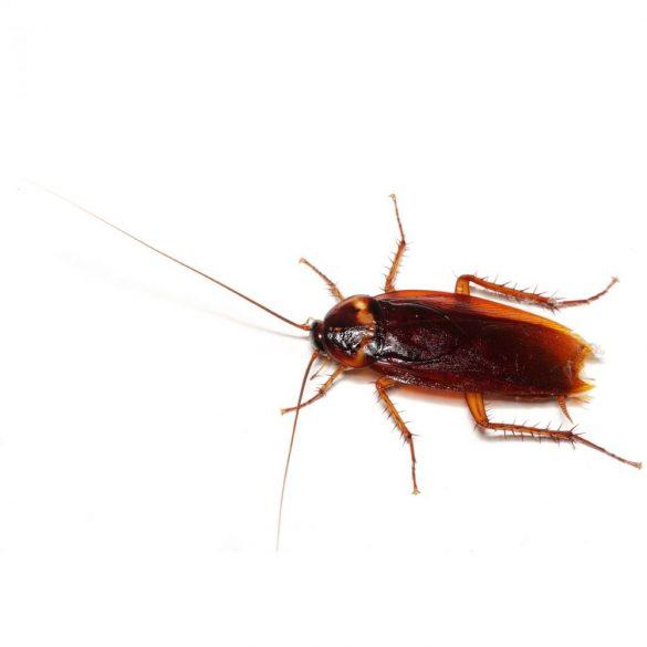 ISOTRONIC kártevő és rovar riasztó variálható frekvenciával 55646